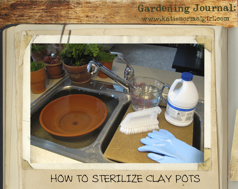 Garden Journal: How to Sanitize Clay Pots from katienormalgirl.com | #gardening #tips