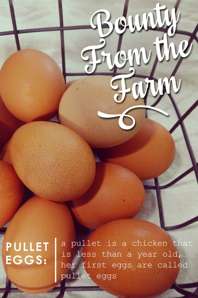 Bounty From The Farm: Pullet Eggs from katienormalgirl.com | #food #eggs