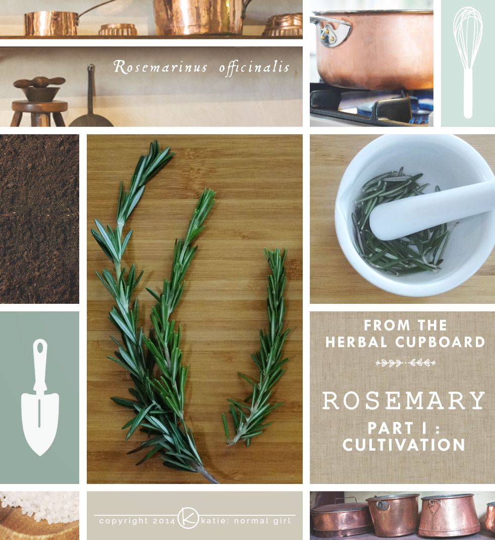 Featured Herb-Rosemary - grow it, cook with it and use it medicinally from katienormalgirl.com | #Cultivation