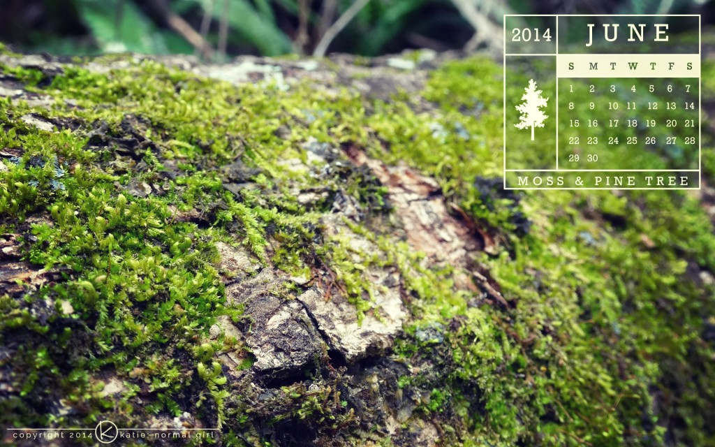 June 2014 Calendar, Moss growing on a fallen pine tree from katienormalgirl.com | #free #downloads #calendars