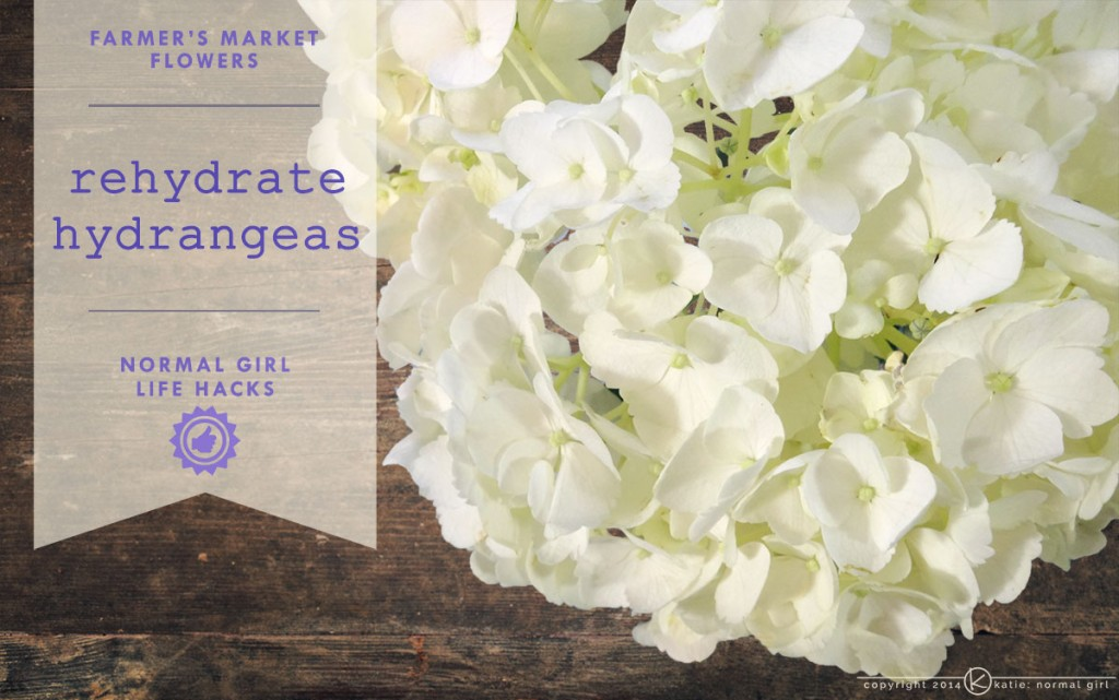 How to rehydrate hydrangeas from katienormalgirl.com | #lifehacks #flowers